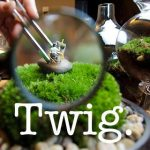 Twig Terrariums logo
